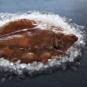 Wholefish Lemon Sole
