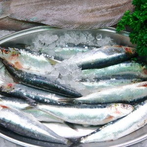 Sustainably Sourced Frozen Sardines