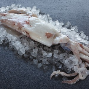 Wholefish Squid