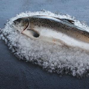 Wholefish Salmon