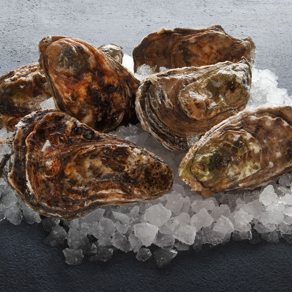 Live Oysters | Dockside Seafood