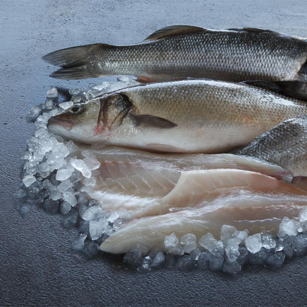 Fresh wholefish seabass fresh white fish fresh fish for Fresh fish company