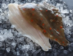 Plaice Fillets
