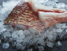 Skinless Red Snapper Fillet