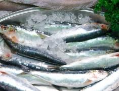 Sustainably Sourced Frozen Sardines