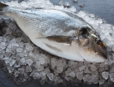 Wholefish Sea Bream