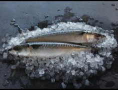 Wholefish Mackerel