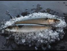 Wholefish Mackerel