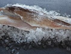 Fresh Skinless Haddock Fillet