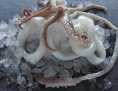 Squid Tubes & Tentacles