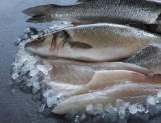 Wholefish Seabass